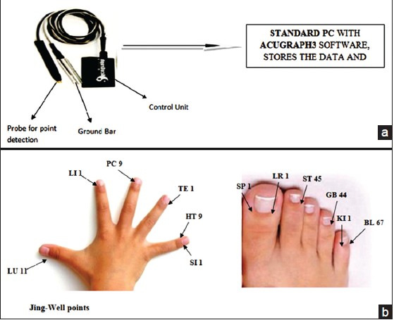 Figure 1: (a) The AcuGraph3 Digital Meridian Imaging System consists of computer software directing an electronic unit in control of a probe and a ground bar used to measure electrodermal resistance at acupuncture points. The ground bar is held in one of the subject's hands, while the probe is used by the operator to measure acupoints on the opposite hand and foot. (b) The 24 Jing-Well acupuncture points are located at the end of left and right branches of each of the 12 main acupuncture meridians, six on each hand and foot as depicted here for the left hand and right foot. In AcuGraph3 operation, the 5 mm head of the probe is placed in contact with each Jing-well acupoint in the order specified by its computer control program. The breadth of the head makes it simple to train operators to locate points correctly. Each reading is recorded by the computer as appropriate pressure is applied by the operator